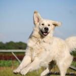 Jonge hond - Tekstschrijver Eindhoven